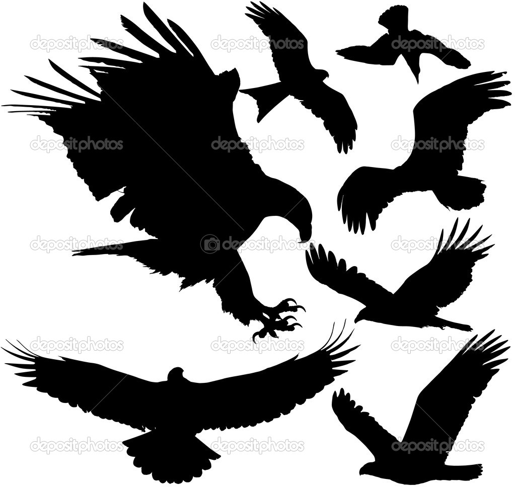 Clipart birds templates eagles and falconsh33traththaran